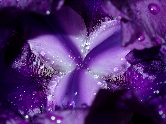 An Open Heart is Full of Droplets