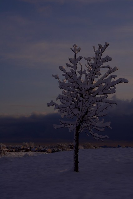 Frosty Tree at Dawn