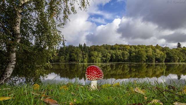 Toadstool by the lake