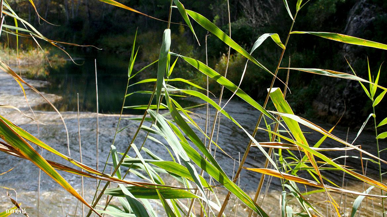 Vegetación en la ruta de las Hoces del Cabriel