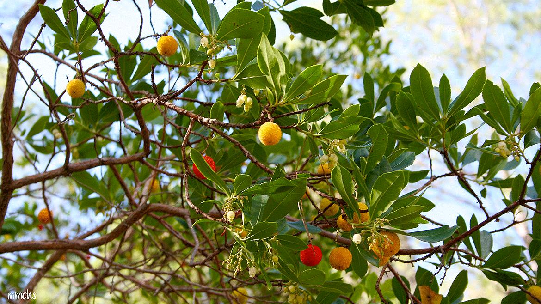 Frutos en la ruta de las Hoces del Cabriel