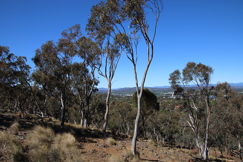 canberra act mtainslie eucalypts sky view trees