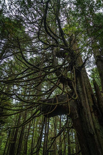 Cape Flattery - Northwestern Tip Of The Pacific Northwestern United States - Washington - September 2019