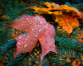 Raindrops - Autumn