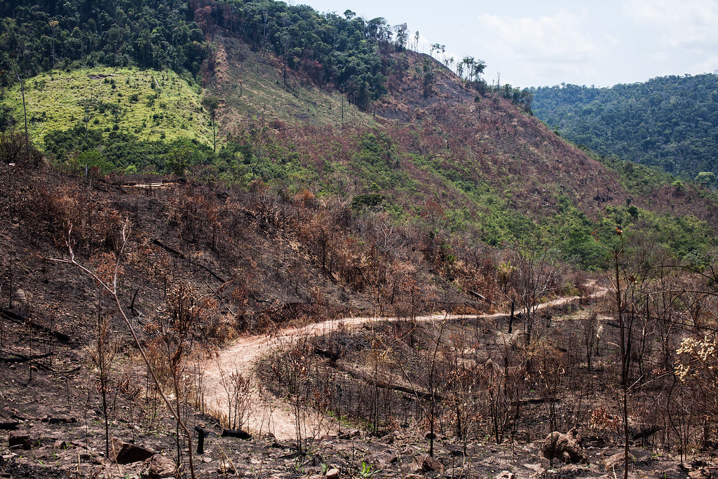 A road winds through protected land, flanked by the charred remains of forest. Photo by Ana Ionova for Mongab