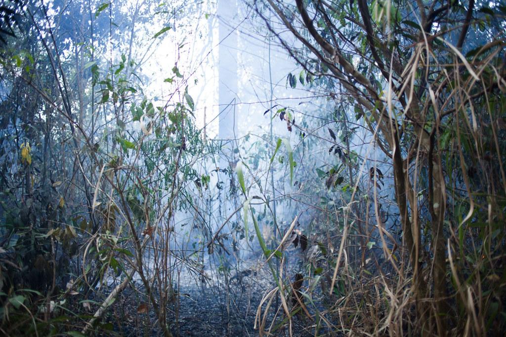 大火焚燒過後的欣古勝利保護區。Ana Ionova攝;來源:Mongabay