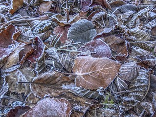 St. Mark's Hike: Icy leaves