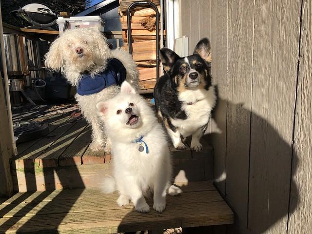 Day 256: family dog photo
