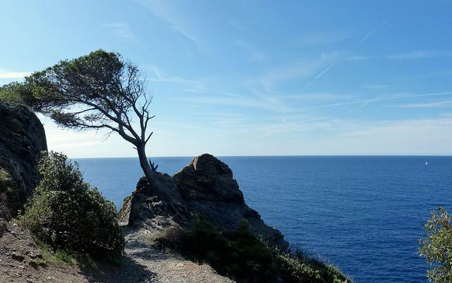 L'arbre penché.....