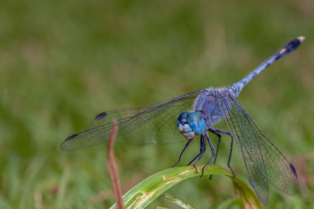 Ol' Blue Eyes - _TNY_3671