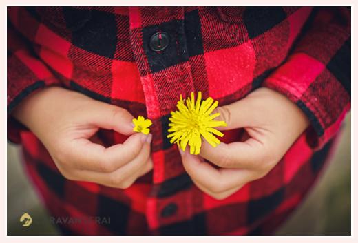 野原で摘んだタンポポの花を手で持って