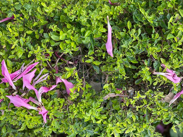 City Season - The Floss-Silk Bloom, Outside Ambience Mall Driveway