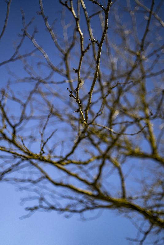 Rokinon/Samyang AF 35mm f/1.4 FE