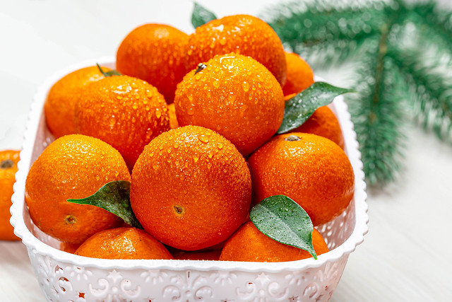 Fresh ripe tangerines with water drops and Christmas tree branches