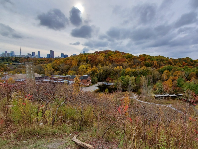 Fall Foliage Evergreen Brickworks
