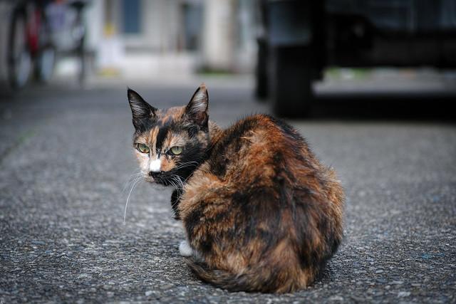 きょうの子猫