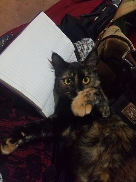 LOST dmh tortishell female cat in #radissonheights #albertpark. Call 587-320-0982 or msg Faith Hatch if sighted or found. Pls rt, share, watch, help find PUMPKIN! ADDITIONAL PHOTO IN COMMENTS YYC Pet Recovery shared a post. This is my life she is my every