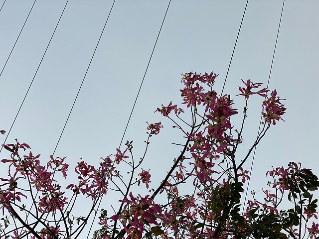 City Season - The Floss-Silk Bloom, Outside Ambience Mall Driveway