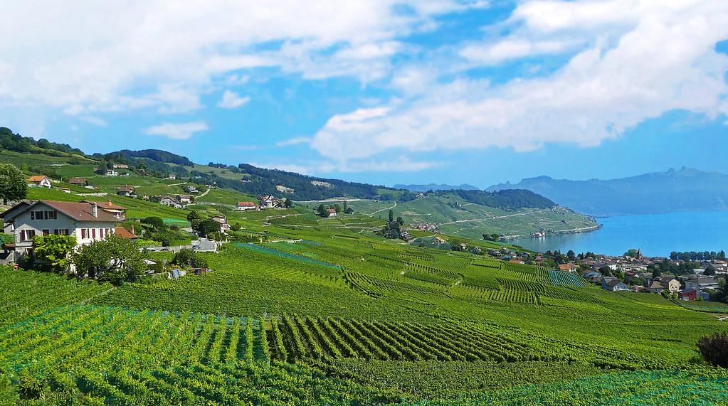 SWITZERLAND - Lavaux vineyards and Leman lake