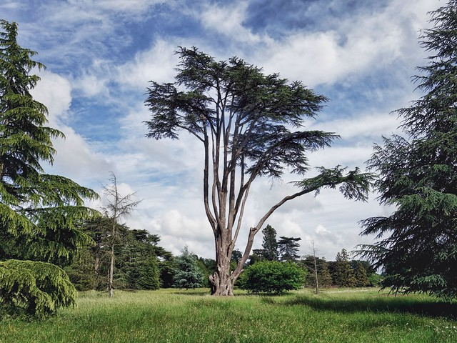 In the gardens of Ickworth House