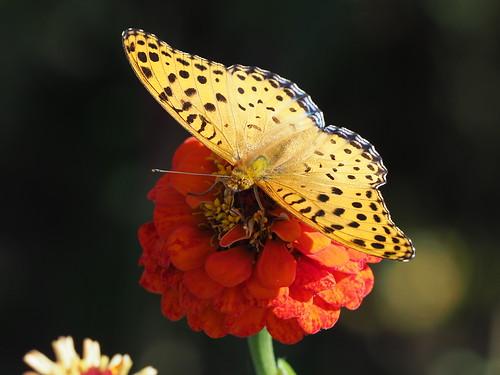OMD EM1 11.21.2019 butterfly 1
