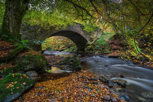Cawdor Woods.