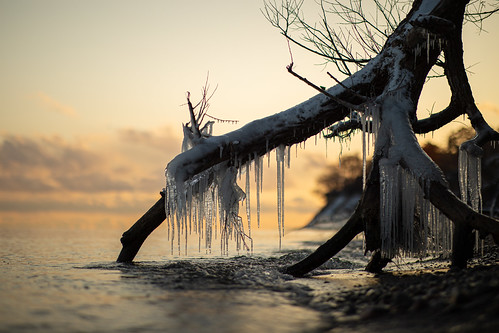tree winter ice cold lake ontario fall autumn sunset shore beach petticoatcreek water clouds