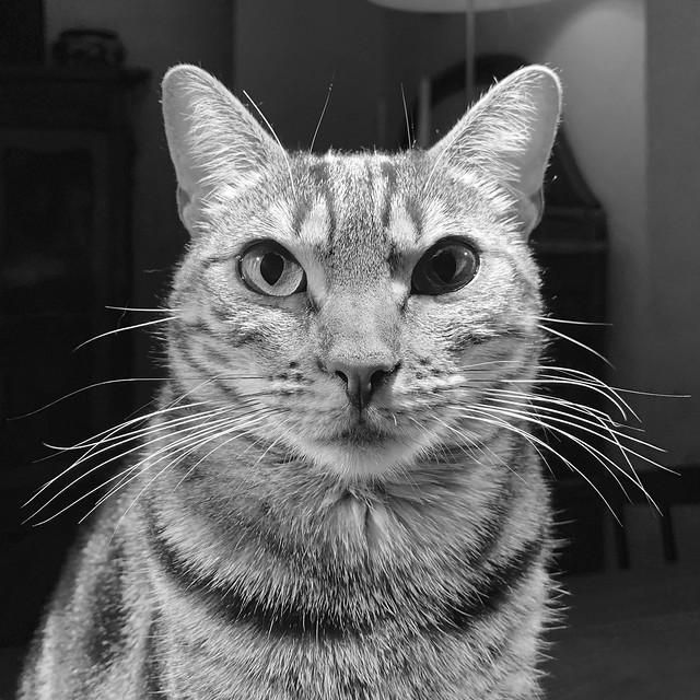 Cat portrait: Lola