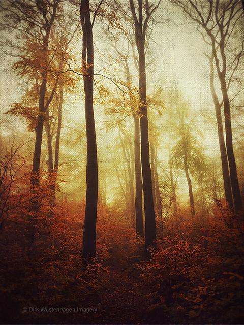 november forest reds