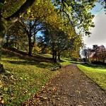 Golden Autumn at Avenham Park