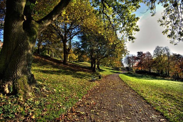 Golden Autumn at Avenham Park