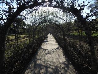 Lost Gardens of Heligan, Mevagissey, Cornwall, apple trees