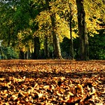autumnn