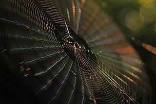Micrathena's web