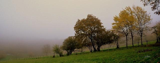 Un brouillard tenace, c'est ça aussi l'automne ....