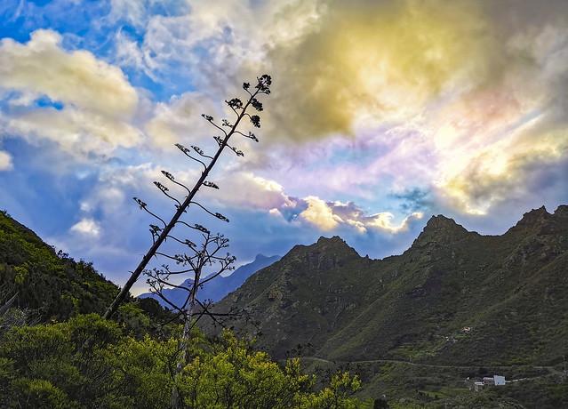 Montes de Anaga - Tenerife