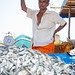 Fish market in Galle, Sri Lanka by TeunJanssen