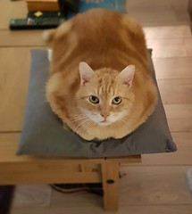 Taz just fits his cushion.