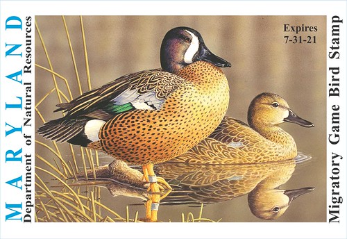 Image of Maryland Migratory Game Bird Stamp with illustration of two teal