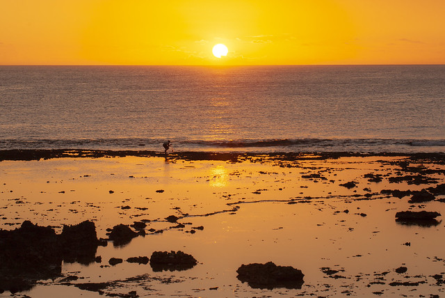 Fisherman casting a net at low tide during sunset.