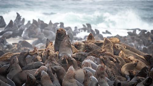 Near Robben island