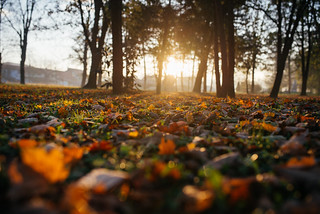 leaves on the ground in a beautiful autumn park