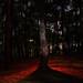 The mystical tree by Ismael Owen Sullivan