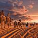 Sahara Desert in Morocco by joe.routon