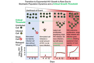 Transition to HIV exponential growth is rare due to random population dynamics and the need for the infected cells to achieve a critical growth threshold.