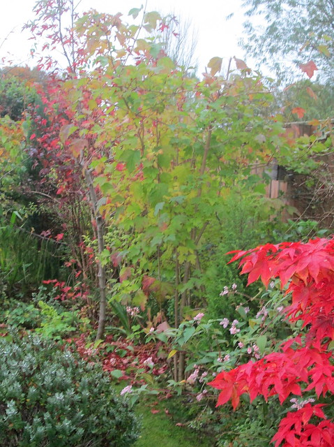 acers , physocarpus, viburnum, liquidambar
