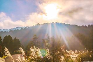 Sunshine on Silvergrass....翠峰湖停車場夕陽前芒草.....
