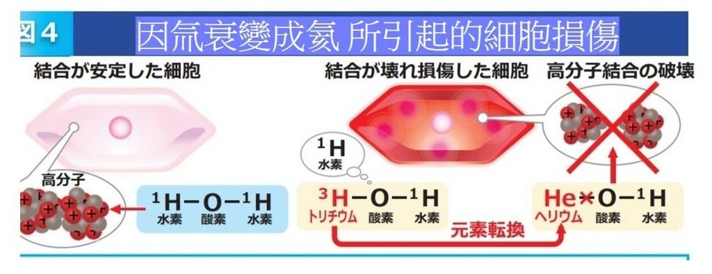 氚在細胞裡衰變成氦。