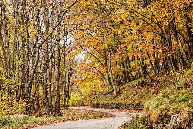 Jesen u šumama oko Klane, studeni 2019. (7)