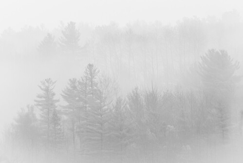 fog trees nature outdoors landscape mono monochrome bw silhouette west sand lake reichards new york rgrennan rwgrennan ryan grennan nikon d610 forest mist